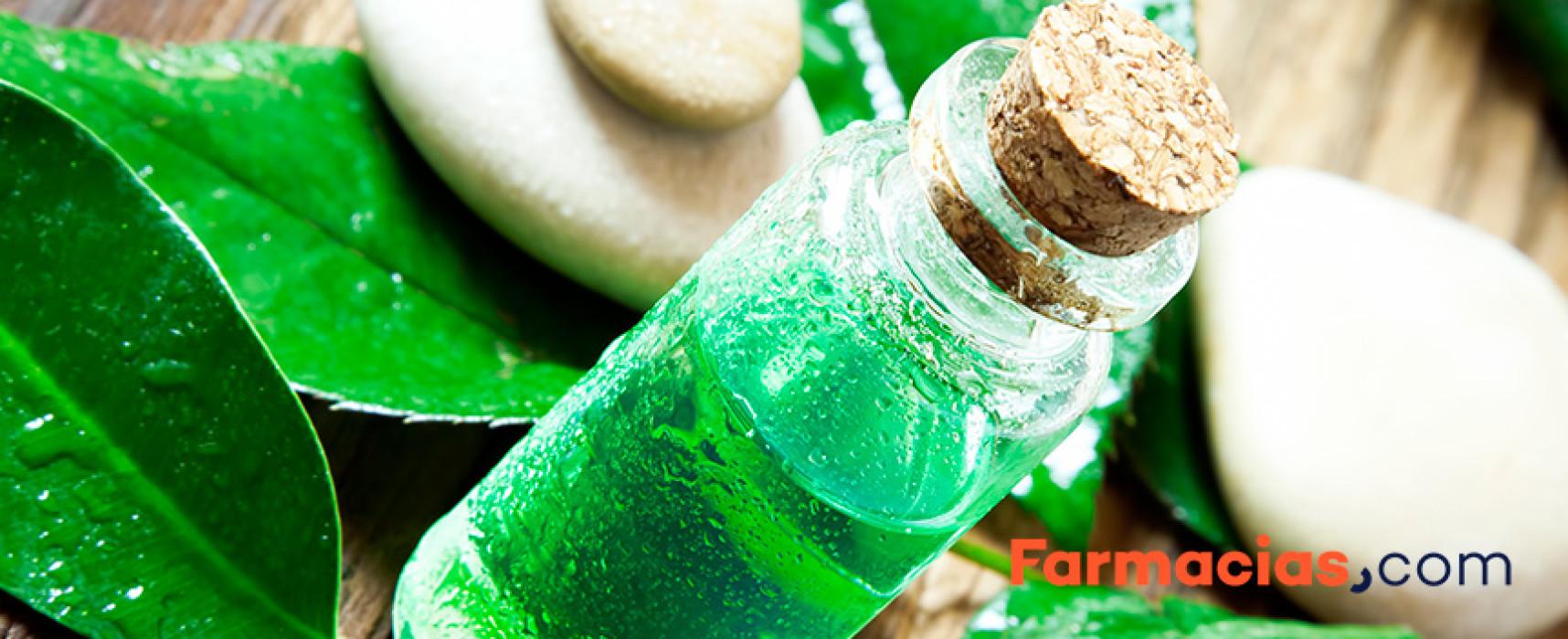 Tratamientos con aceite del árbol del té para los piojos
