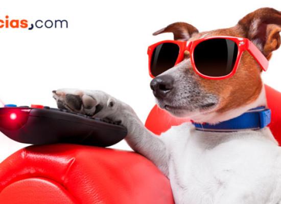 ¿Qué le gusta ver a tu perro en la televisión?