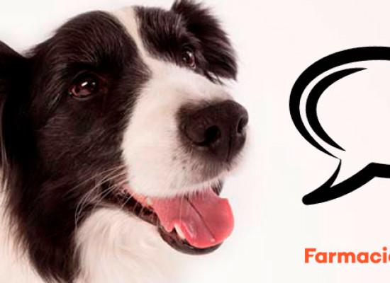 ¿Cuántas palabras saben los perros?