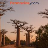 Baobab, el coloso de la salud llegado de África
